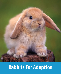 Rabbits For Adoption Button 2a
