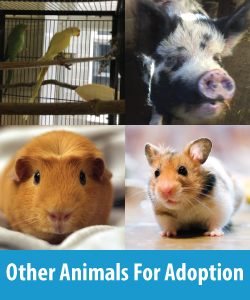 Other Animals For Adoption Button 2a